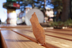 Yellow leaf on a wooden bench. A yellow dry leaf was discovered standing between the space of wooden bench in the downtown of Boulder, Colorado Stock Photos