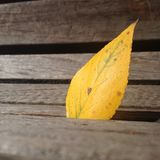Yellow Leaf. Wooden Bench. Nature Stock Photography