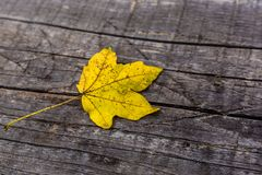 Yellow leaf on the wooden board stock photos
