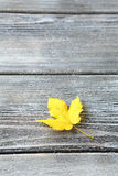 Yellow leaf on wooden boards Stock Photography