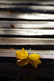 Yellow Leaf on Wooden Path covered with Frost Royalty Free Stock Images