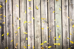 Yellow leaf on Wooden wall texture. Wood background Stock Images
