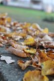 Yellow leaf. Yellow leaves in autumn in city Stock Image