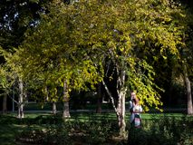The yellow leafe with girl royalty free stock photo