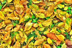 Yellow leafs. (abstract photo, background Stock Photos