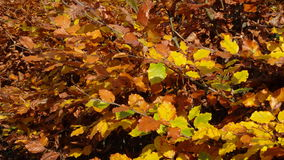 Yellow Leafs Royalty Free Stock Photos