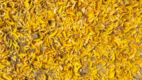 Yellow leafs falling on the floor background Royalty Free Stock Photography