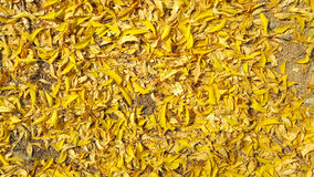 Yellow leafs falling on the floor background Stock Photo