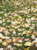 Yellow leafs on green grass Royalty Free Stock Photo