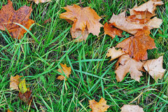 Yellow leafs in green grass Stock Photo