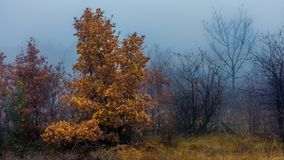 Autumn fog. Yellow leafs in the mist Stock Image