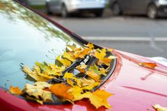 Yellow leaves on the red car. Yellow leaves on the window of a red car royalty free stock images