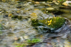 Yellow leafs resting on moss. Bright yellow leafs resting of Bright lush green moss next to a flowing stream Stock Image