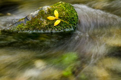 Yellow leafs resting on moss. Bright yellow leafs resting of Bright lush green moss next to a flowing stream Royalty Free Stock Photography