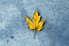 Yellow Leave on Pavement in autumn Royalty Free Stock Images