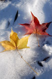 Yellow leave and red leave. Beautiful yellow leave and red leave on snow stock photo