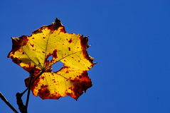 Yellow leave on sky Stock Photos