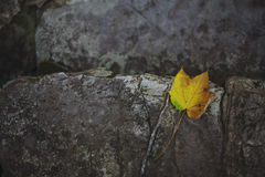 Yellow Leave on a Stone. This is a typical autumn photo Royalty Free Stock Photo