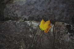 Yellow Leave on a Stone. This is a typical autumn photo Royalty Free Stock Photos