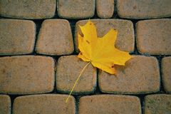Yellow leave. At stones Royalty Free Stock Photography