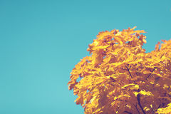 Yellow Leave Tree Under Blue Sky during Daytime Royalty Free Stock Photo