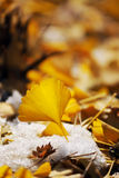 Yellow Leaves. Beautiful yellow leaves on snow Stock Images