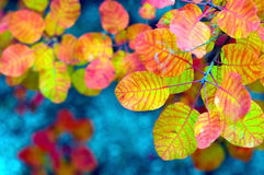 Yellow leaves. (autumn colors of the nature Royalty Free Stock Photos