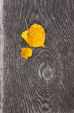 Yellow leaves. Two yellow leaves on the grey wooden plank stock image