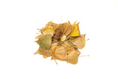 Yellow leaves Royalty Free Stock Image