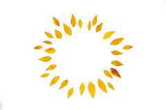 Yellow leaves arranged in round shape on white background. Stock Image