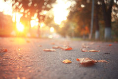 Yellow leaves on an asphalt blurred urban background Royalty Free Stock Images
