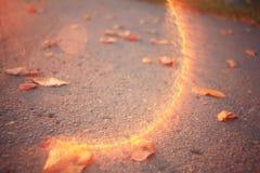 Yellow leaves on an asphalt Royalty Free Stock Photo