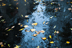 Yellow leaves on asphalt and puddles Royalty Free Stock Photo