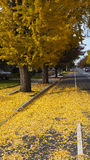 Yellow leaves with autumn colors in a residential area Stock Photo