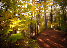 Yellow leaves in autumn forest Stock Image