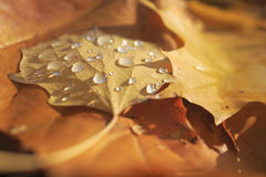 Yellow leaves at autumn forest Stock Photography