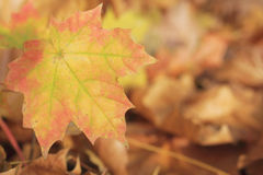 Yellow leaves at autumn forest Royalty Free Stock Image