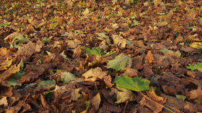 Autumn, yellow and green leaves Royalty Free Stock Photos