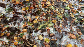 Autumn yellow leaves and first ice Stock Photo