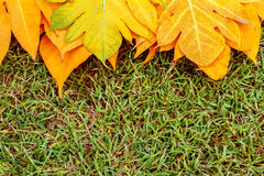 Yellow leaves autumn leaf on green grass background Royalty Free Stock Photography