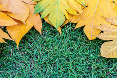 Yellow leaves autumn leaf on green grass background Royalty Free Stock Images