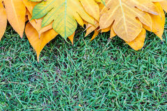 Yellow leaves autumn leaf on green grass background Royalty Free Stock Photos