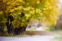 Yellow leaves in autumn park Royalty Free Stock Photography