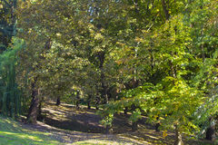 Yellow leaves in autumn park in the afternoon Royalty Free Stock Image