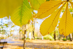 Yellow leaves in autumn park Stock Image