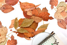 Yellow leaves of autumn. A textbook and a magnifying glass.On a light background. Stock Image