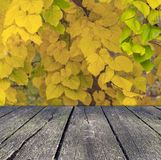 Yellow leaves from autumn tree with wooden terrace in the foreground. Natural forest leaves Stock Photo