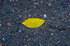 Autumn leaf lies on a wooden Board stock images