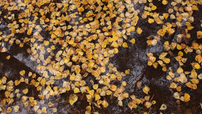 Autumn yellow leaves in water Stock Photography