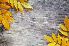 Yellow Leaves Backdrop Stock Photo